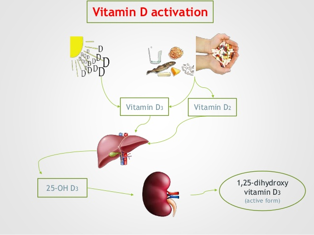 vit-d-and-cancer-prevention-10-638